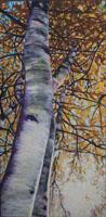 Bursting Birch 24 x 48